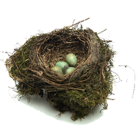 Nest Png PNG Image