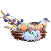 Nest Image PNG Image