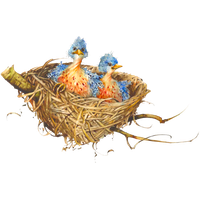 Nest Picture PNG Image