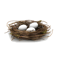 Nest Png Hd PNG Image