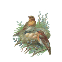 Nest Png Image PNG Image
