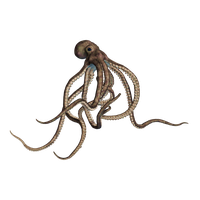 Octopus Transparent PNG Image