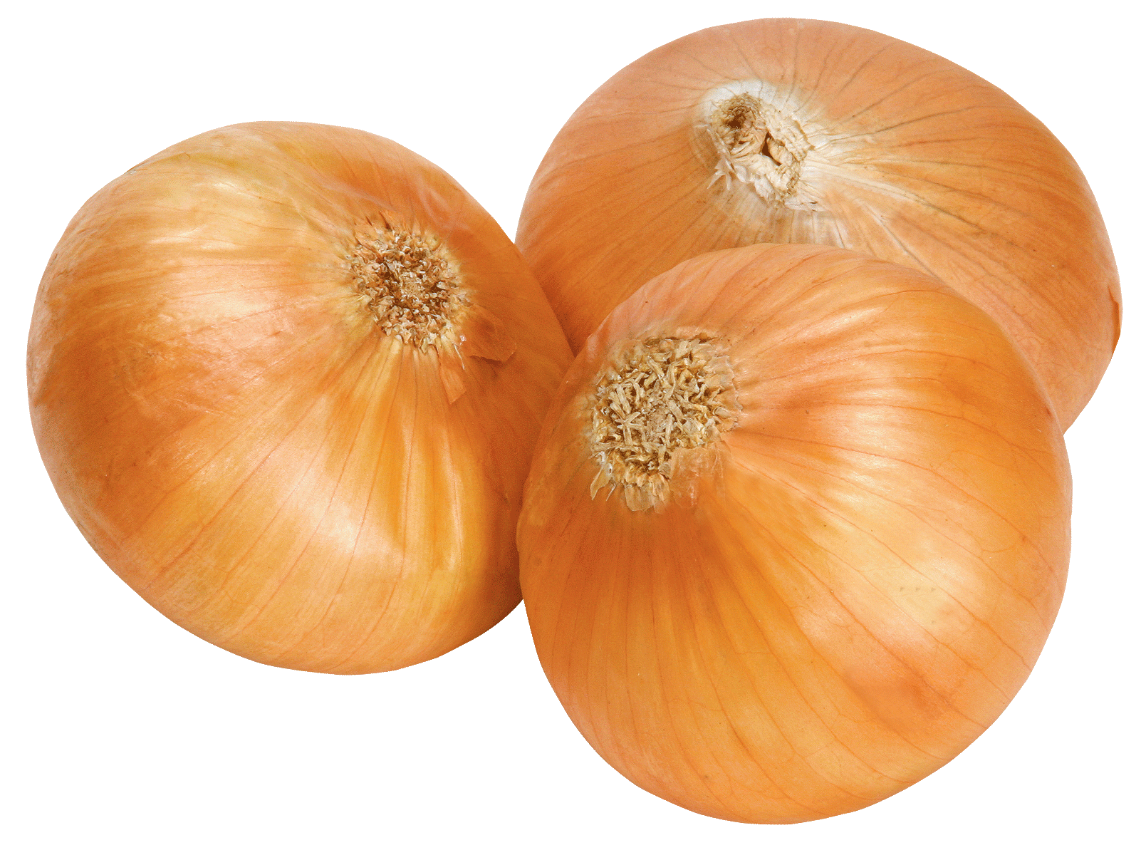 Onion Free Download Png PNG Image