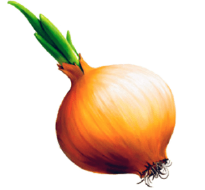 Onion Png Image Download Picture PNG Image