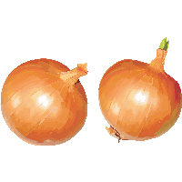Similar Onion PNG Image