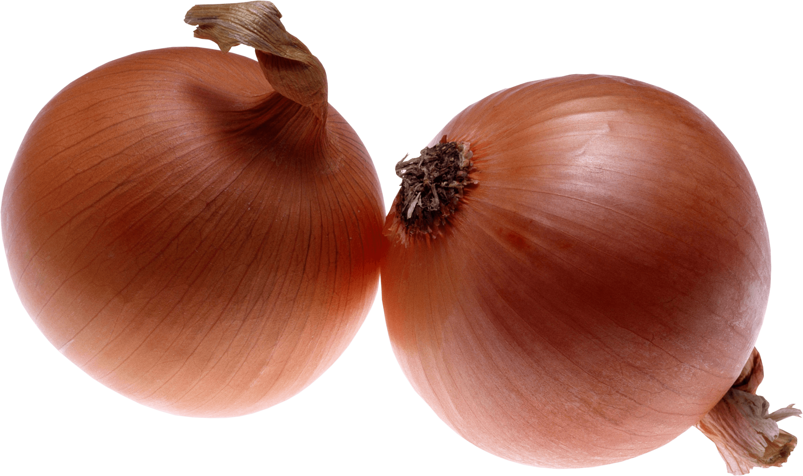 Onion Png Image PNG Image