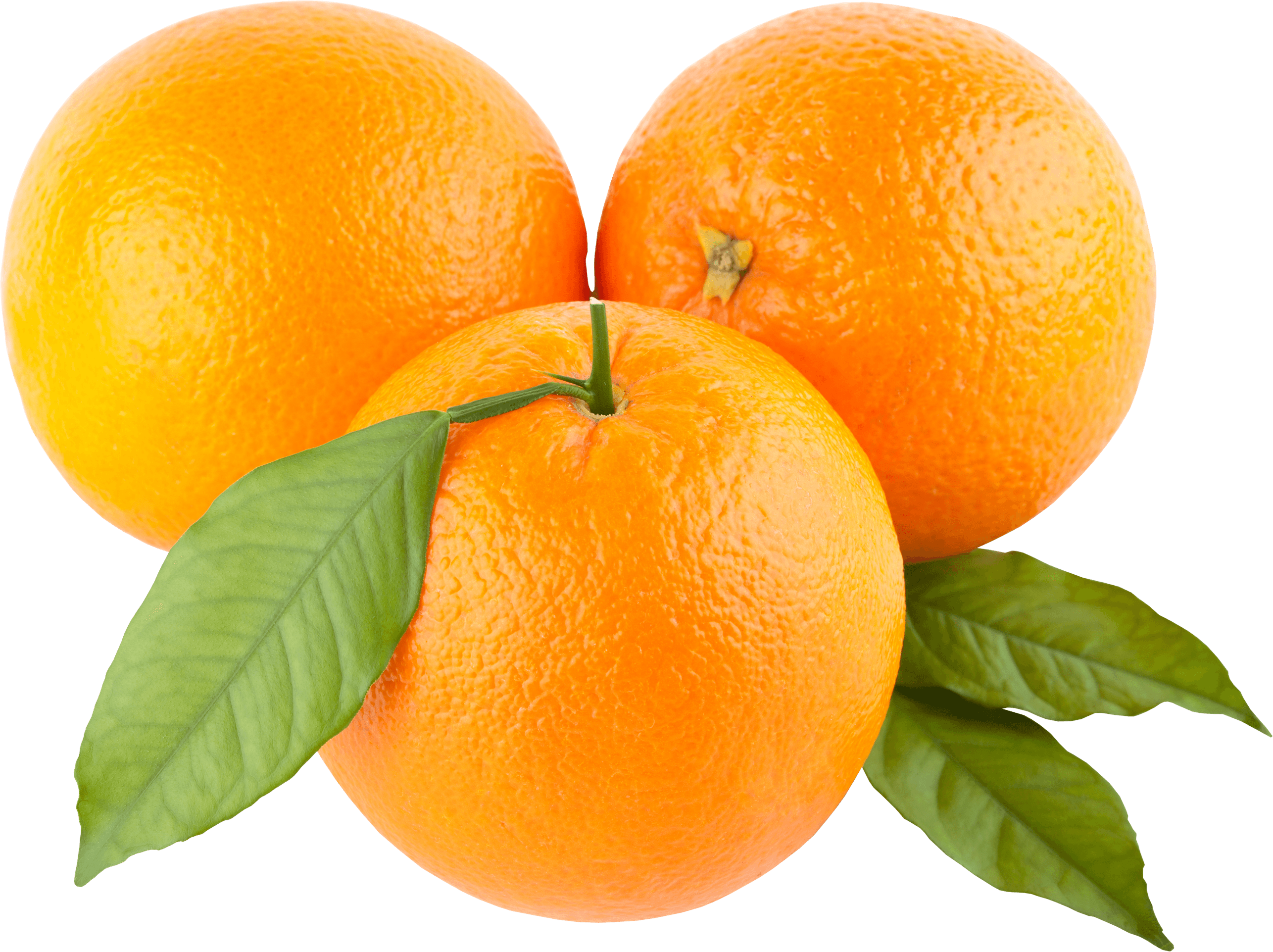 Download Orange Png Image Download Hq Png Image Freepngimg The orange is the fruit of the citrus species citrus sinensis in the family rutaceae. download orange png image download hq
