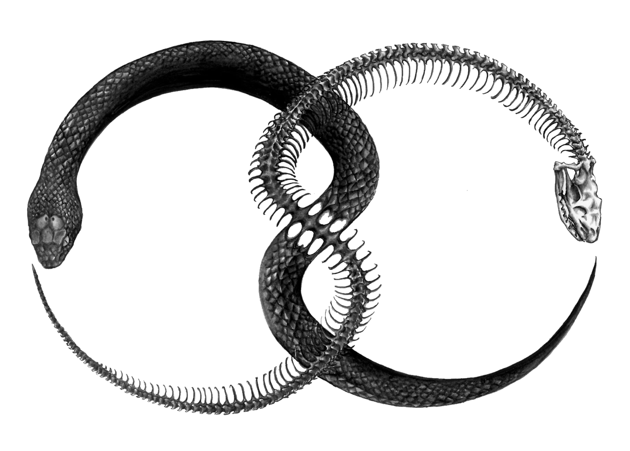 Images Tattoo Symbol Ouroboros Transparent PNG Download Free PNG Image