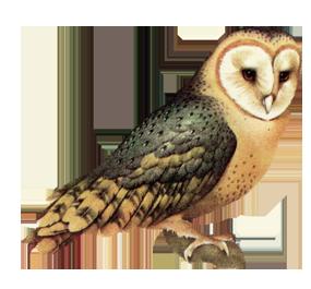 Download Owl High Quality Png Hq Png Image Freepngimg