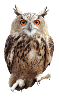 Owl Png Picture PNG Image