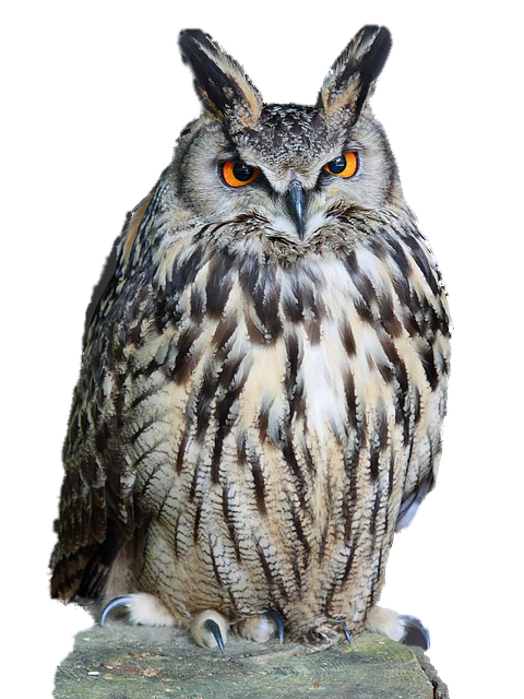 Owl Download Png PNG Image