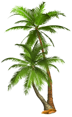 Tropical Palm Tree Png PNG Image