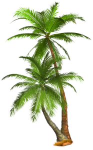 Palm Tree Png Hd PNG Image