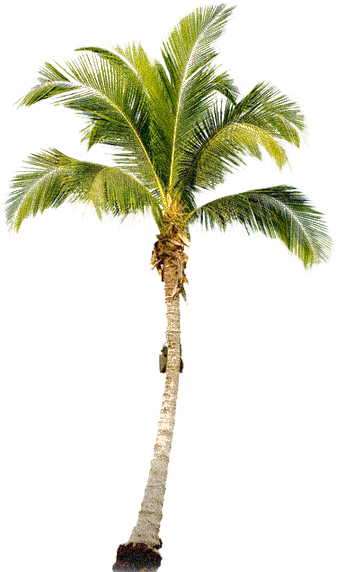 Palm Tree Free Download Png PNG Image