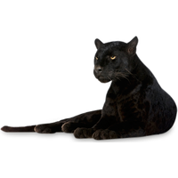 Panther Picture PNG Image