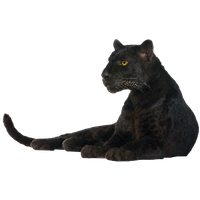 Panther Png Image PNG Image