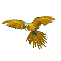 Flying Parrot Png Images Download<B>素材格式</B>: PNG<B>素材尺寸</B>: 1024x819<B>檔案大小</B>: 119.4KB<B>推薦人數</B>: 833