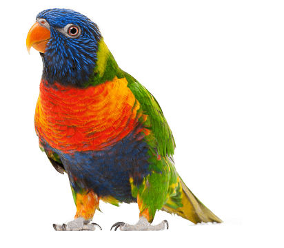Parrot Png Images Download PNG Image