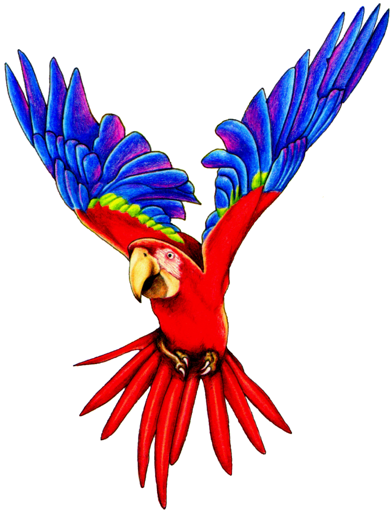 Flying Parrot PNG Image