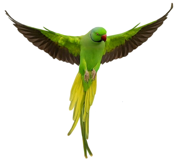 Parrot Download Png PNG Image