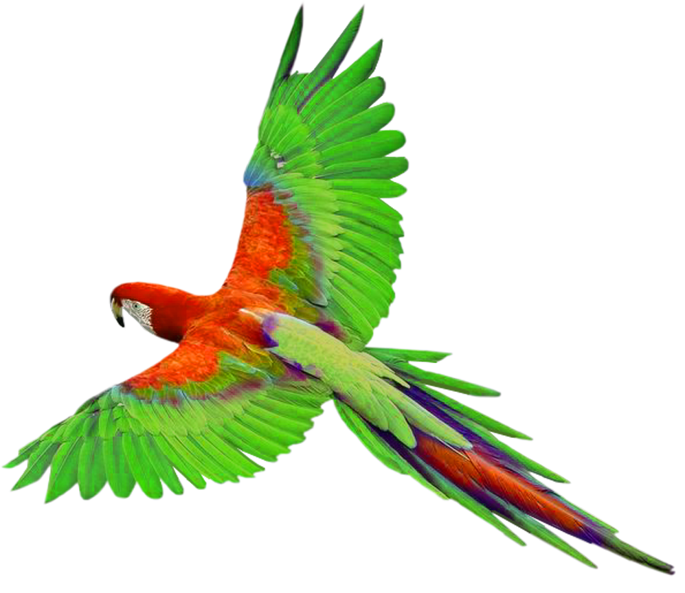 Parrot Png Picture PNG Image