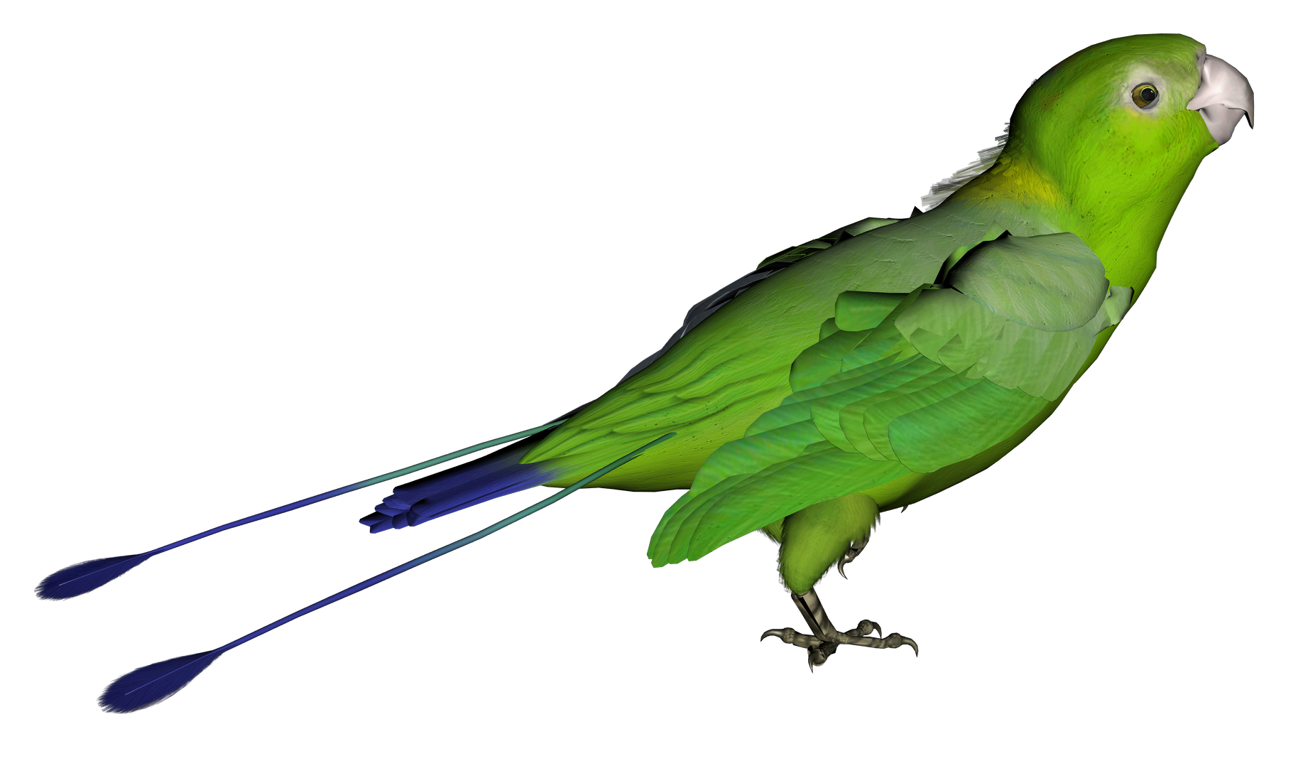 Parrot Png Clipart PNG Image