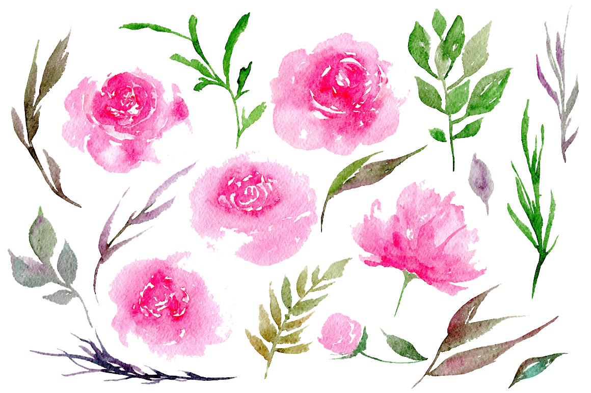 Peonies Clipart PNG Image