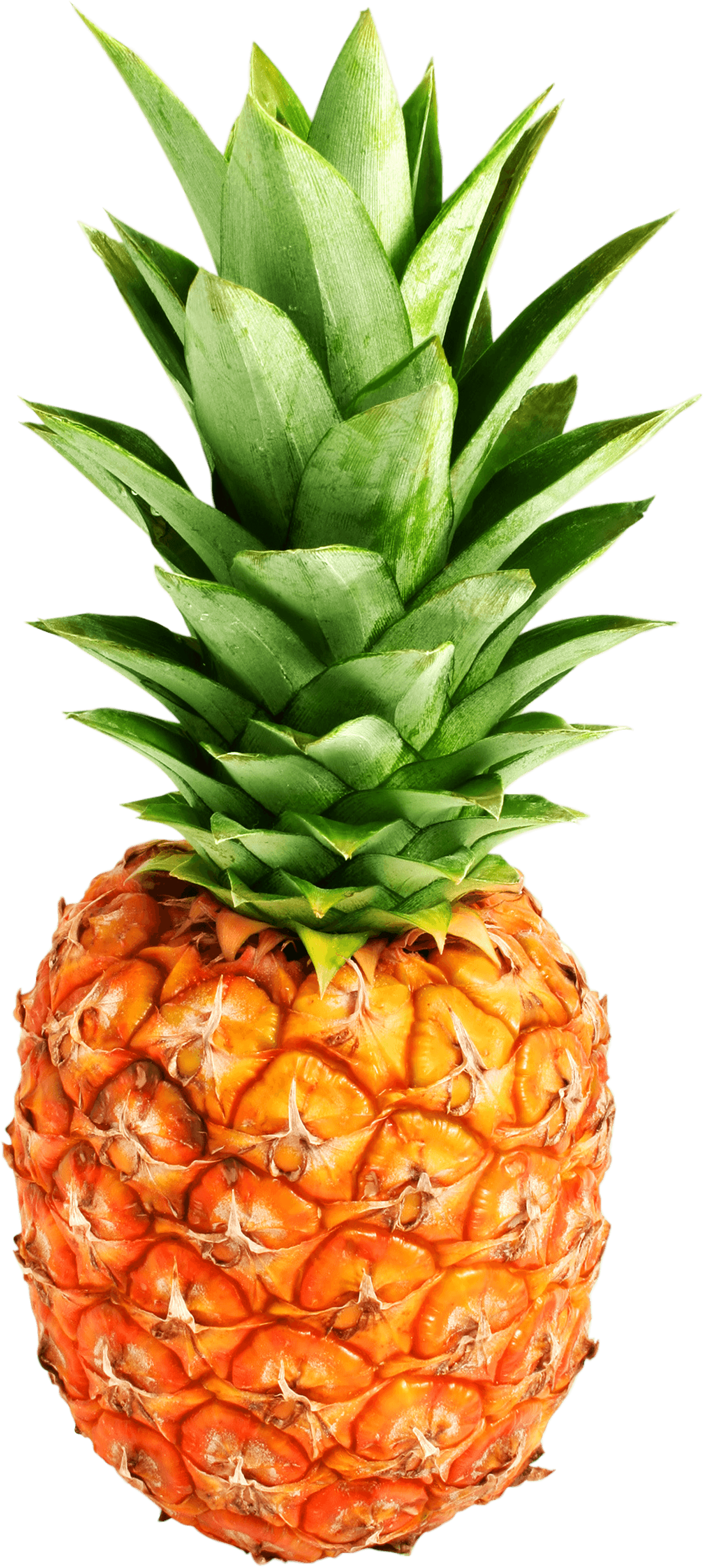 Download Pineapple Png Image Download Hq Png Image Freepngimg Pineapple juice smoothie fruit honey, pineapple png. download pineapple png image download
