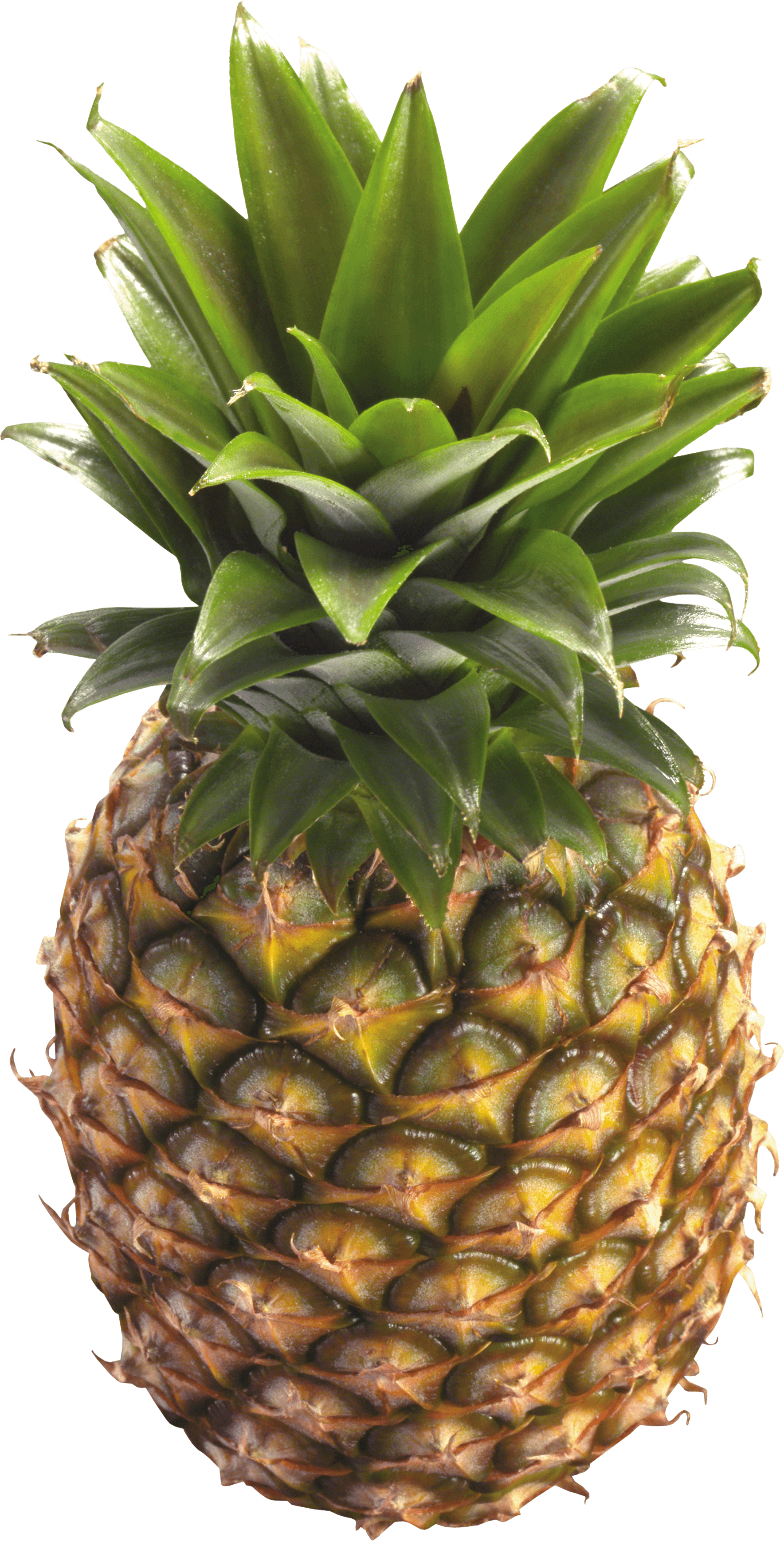 Download Pineapple Png Image Download HQ PNG Image ...