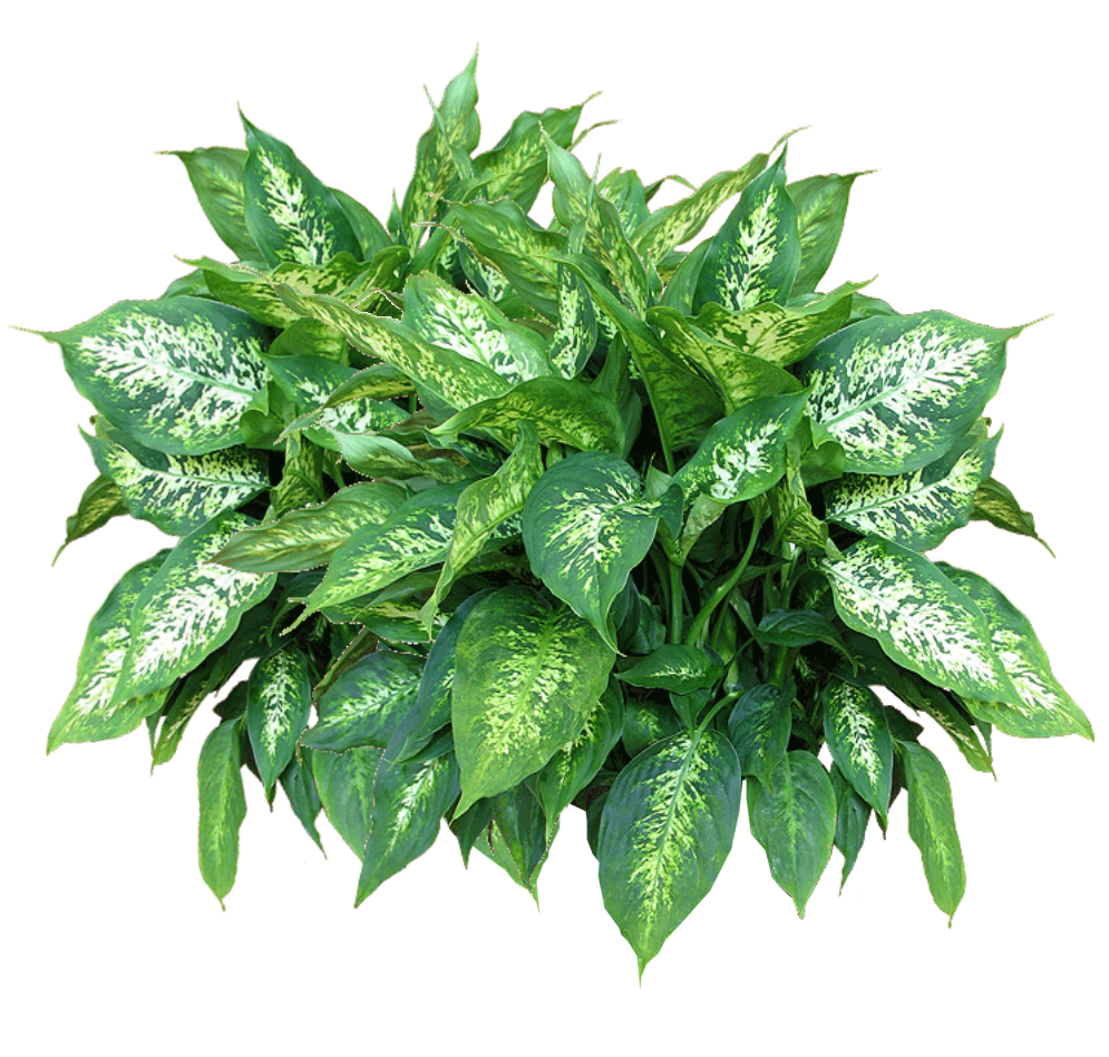 Plants Free Download Png PNG Image