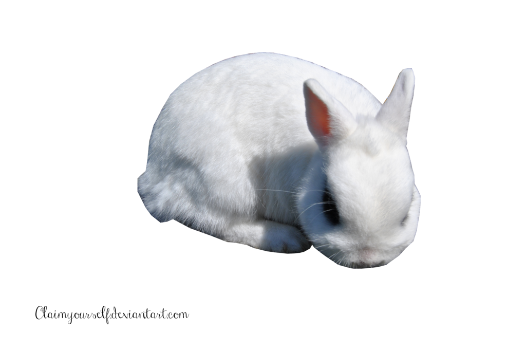 White Rabbit Clipart PNG Image
