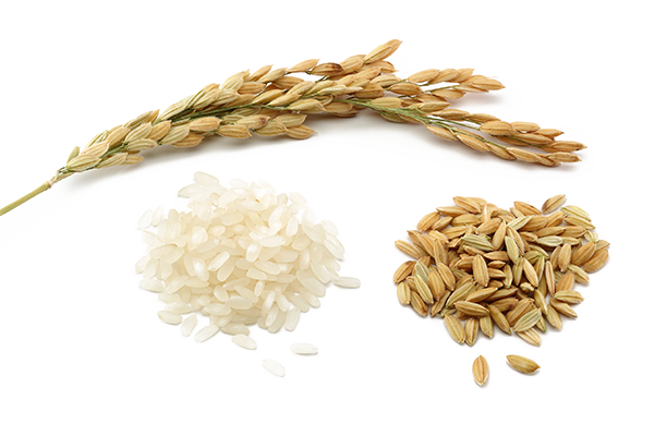 Rice PNG Image