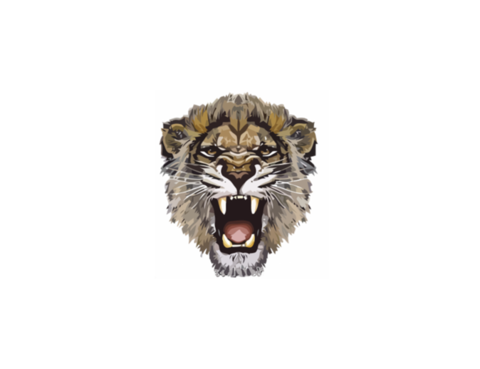 Lioness Roar Photos PNG Image