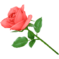 Pink Rose Png Image Picture Download PNG Image
