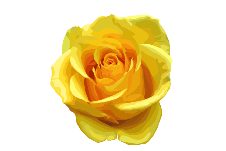 Yellow Rose Transparent Image PNG Image