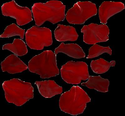 Download Rose Petals Transparent HQ PNG Image | FreePNGImg