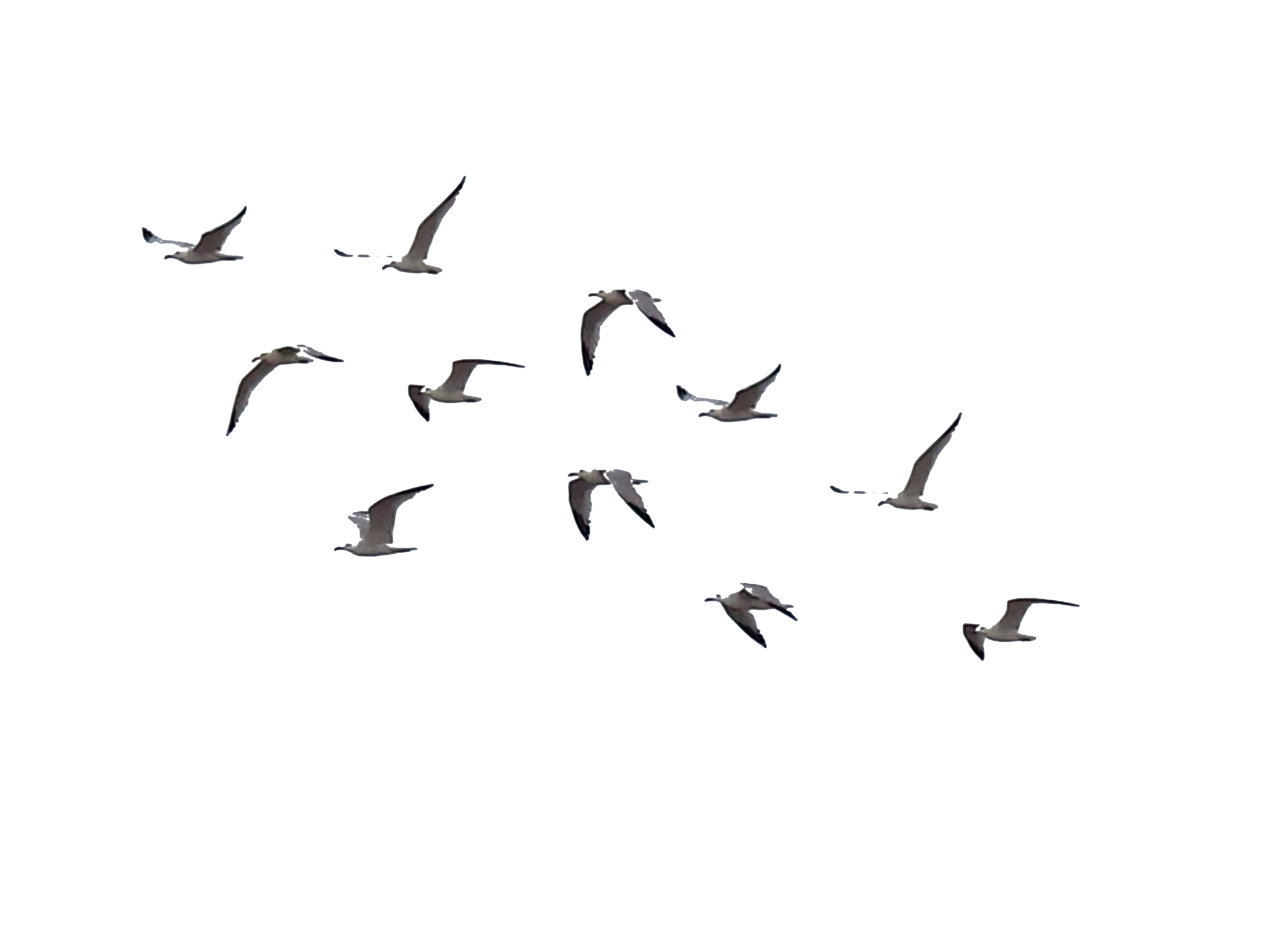 Ocean Birds Image PNG Download Free PNG Image