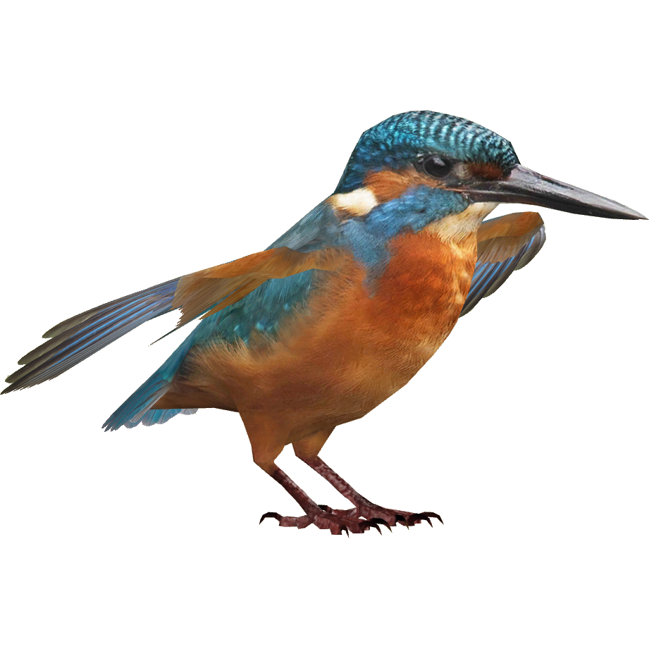 Kingfisher HD PNG Free Photo PNG Image