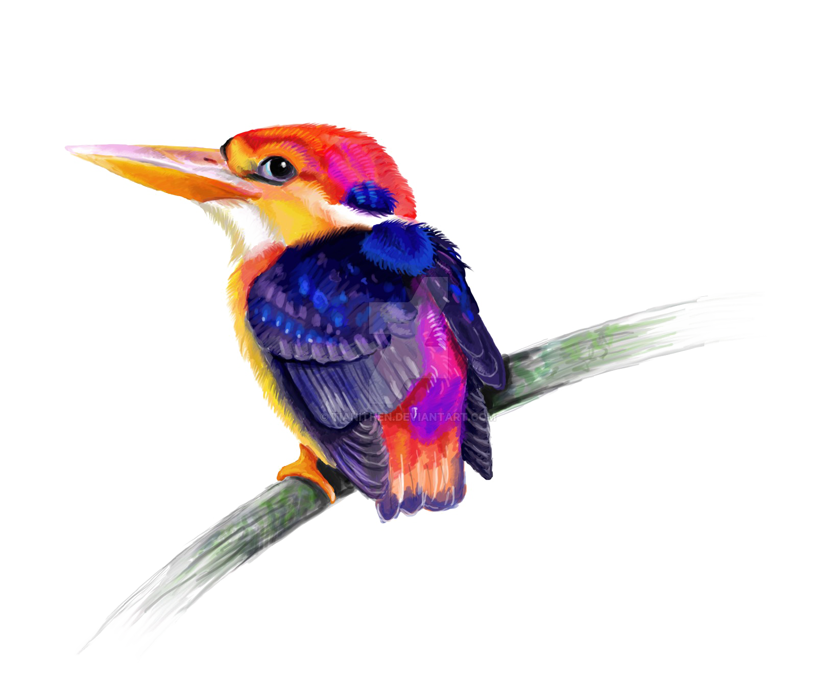 Kingfisher Free PNG HQ PNG Image