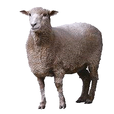 Sheep Png Image PNG Image