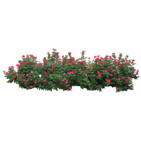 Download Shrub Bushes Free PNG photo images and clipart