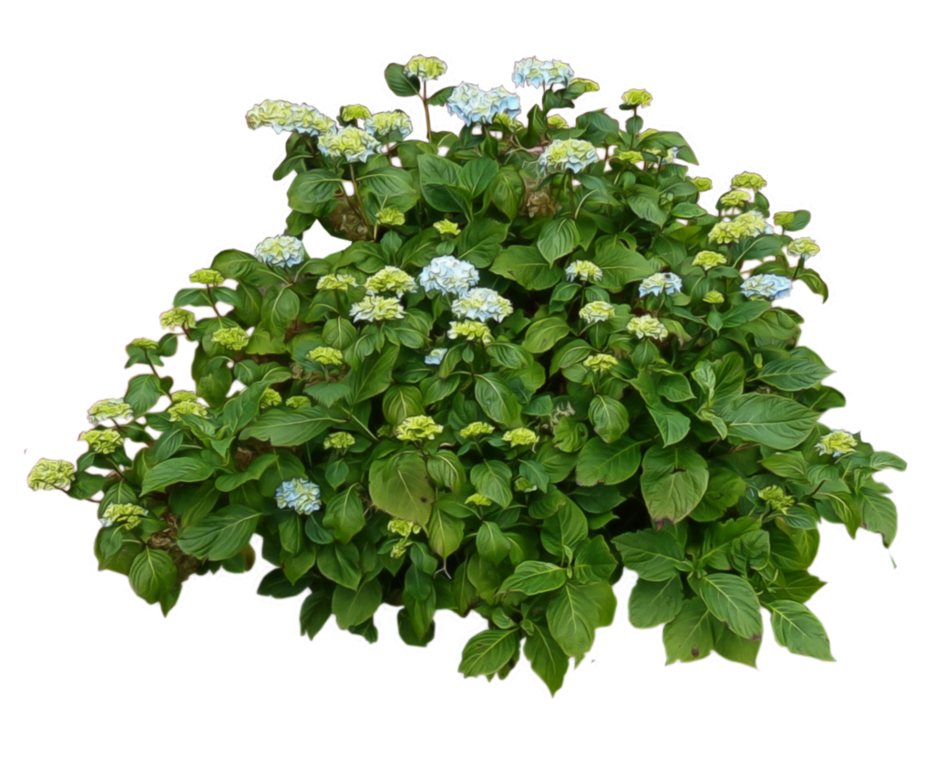 Bushes Free Download Png PNG Image