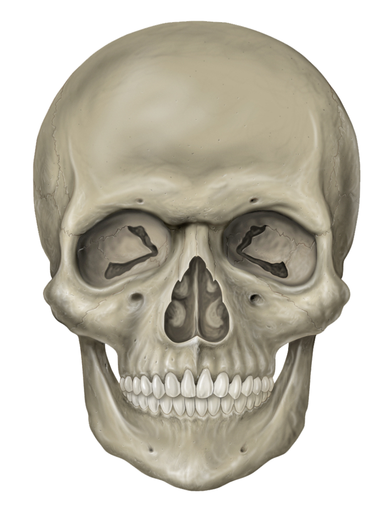 Skeleton Head Free Download Png PNG Image