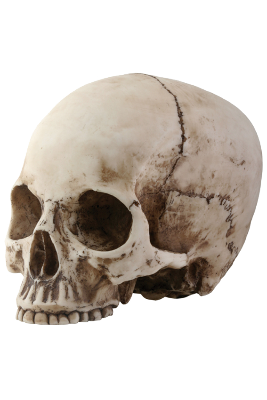 Skeleton Head Png Picture PNG Image