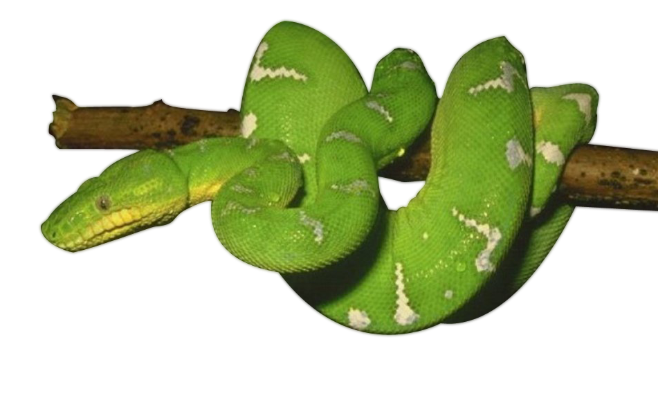 Green Snake Photos PNG Image