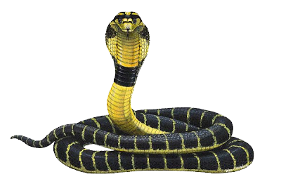 Cobra Snake Transparent PNG Image