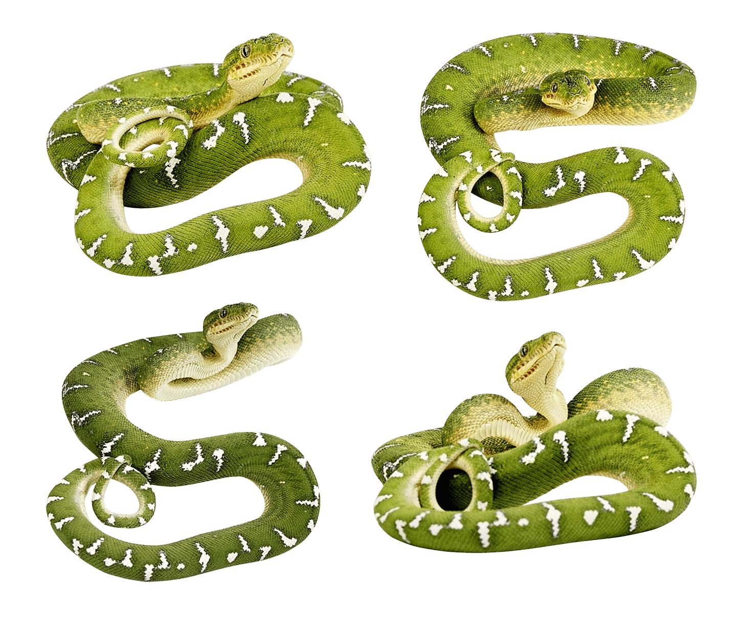 Green Snakes Png Image PNG Image