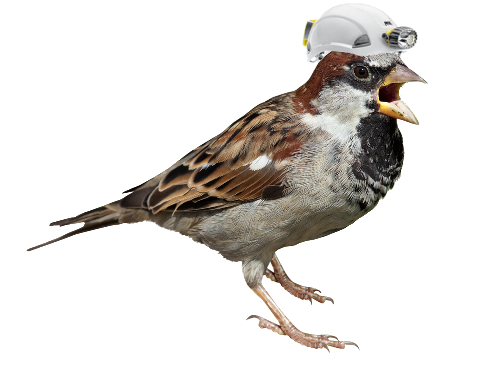 Sparrow Png Picture PNG Image