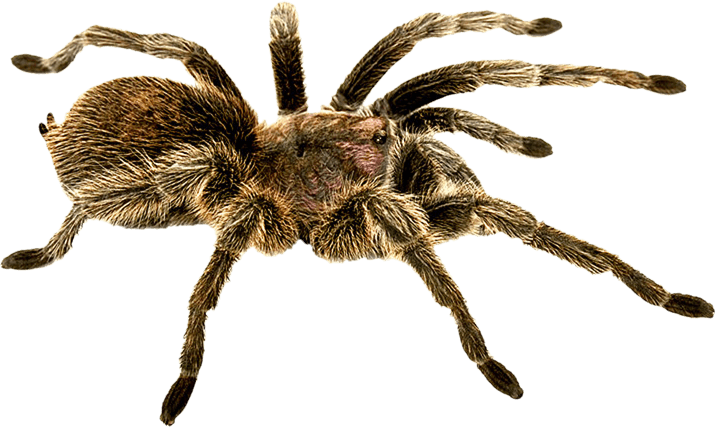 Download Spider Png Image Hq Png Image Freepngimg Download free spider web png images. download spider png image hq png image
