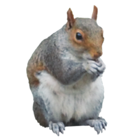 Squirrel Png PNG Image